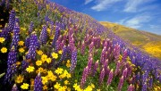 Flowers and Gardens HQ wallpapers Collection 2 36050e108363500