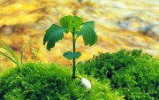 Green Plants Birth HD Wallpapers 956873108973671