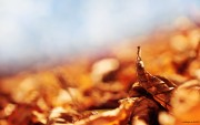 Autumn wallpapers Bd1f32108976921